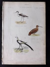 Richardson 1862 HC Bird Print. Avocet, Chinese Jacamar, Common Snipe